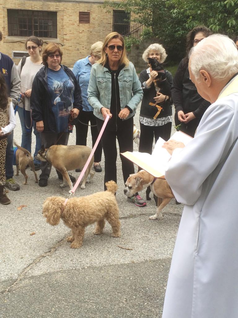 Fiesta de San Francisco de Asís: bendición de los animales